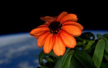在太空中用 LED 燈種出唯一的花