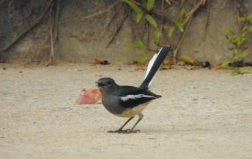 野鳥攝影術六件要知的事