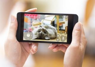 手機 App 可操控鈴聲播放、餵食、拍照、錄影、光點遊戲等功能。