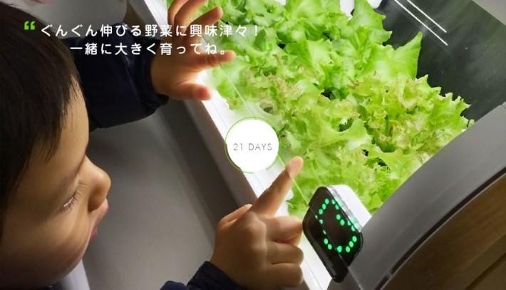 玻璃罩方便屋企人觀察溫室內啲菜生長。
