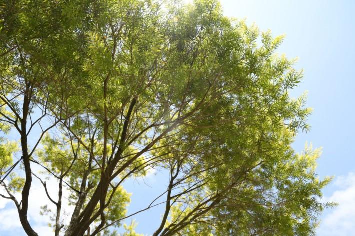 D500_tree