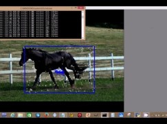 【馬迷最強利器!?】英大學研發馬匹行為辯識工具
