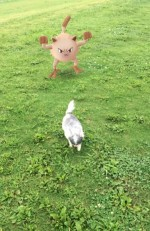 Pokemon Go pet