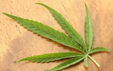 微軟雲端平台協助合法賣大麻