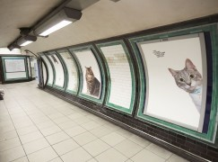 【貓全部都係貓】倫敦地下鐵成貓奴限時潮聖地