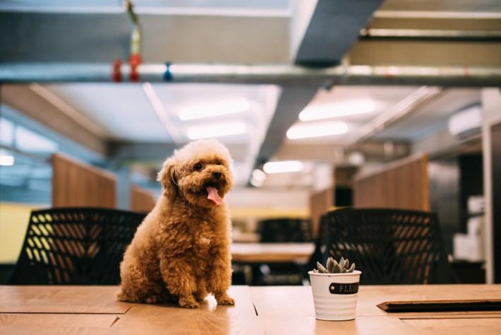 空間推行寵物友好政策,鼓勵空間使用者與愛寵一同工作。