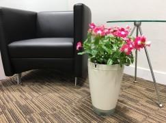 Parrot POT 智能裝置幫手種花