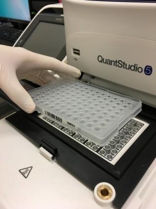 利用實時 PCR 系統進行分析,以顯示目標基因的詳細列序