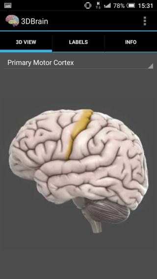 App使用3D圖像,解釋腦部不同部分的位置。