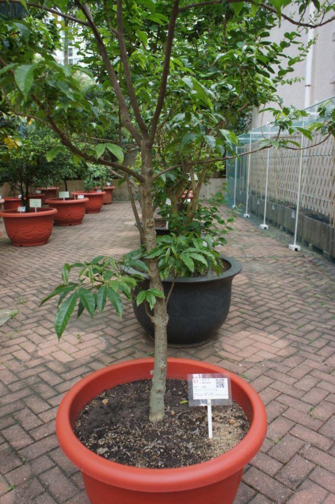 學校的植物附有QR Code, 中一學生可從真實接觸認識萬 物變化。