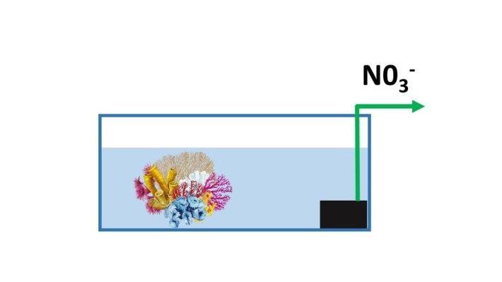 一般水族箱的系 統不能有效減少硝酸 鹽,所以我們要定期換 水,把積聚了的硝酸鹽 清理。