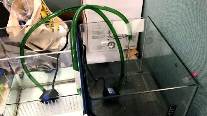 利用水底水泵抽水。