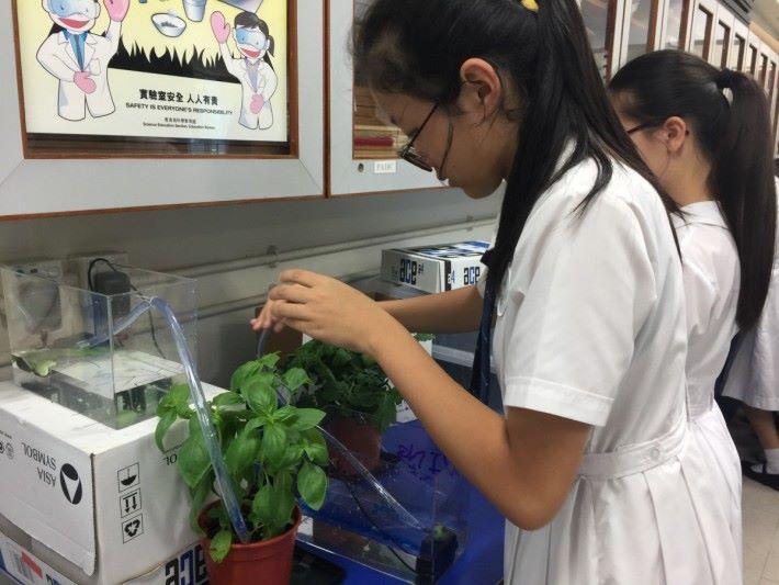 於植物上加入電子裝置,以科學方式種植,是STEM的生活例子,也是今屆的工作坊活動之一。