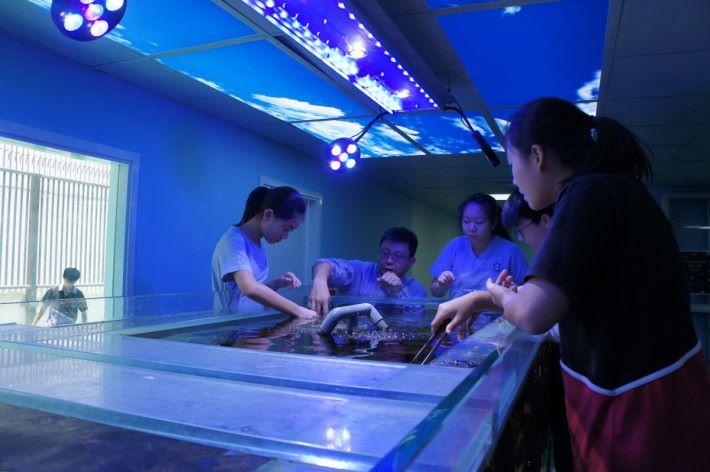 劉校長期望通過啟發學生對海洋產生興趣,一方面可協助拯救香港珊瑚,另一方面也可培育出海洋生物學家。