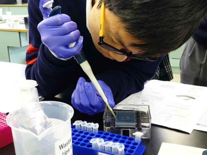 Step 2 : 按課堂指示的份量,將上一節課準備的基因注射至啫喱空格內。