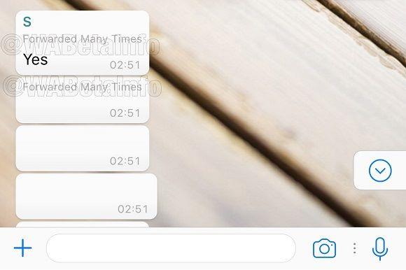 當你收到垃圾訊息時,WhatsApp 會把訊息標為「被多次轉發」。Source:WABetaInfo