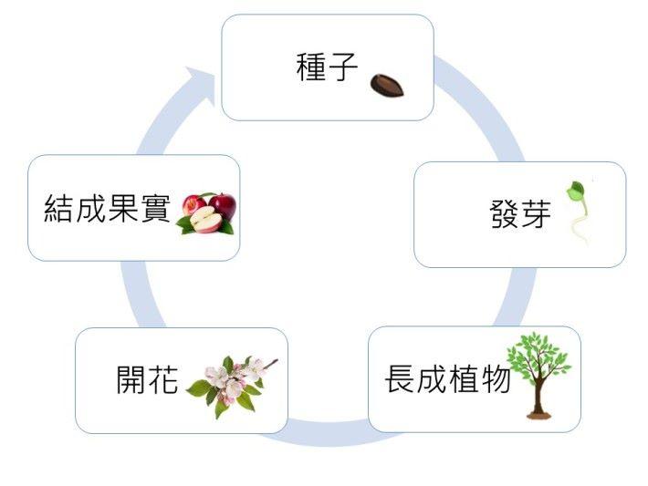 植物是大自然中,變化十分明確的變形生物。