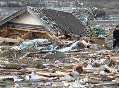 日本政府計劃利用 AI 整理及分析災害情報