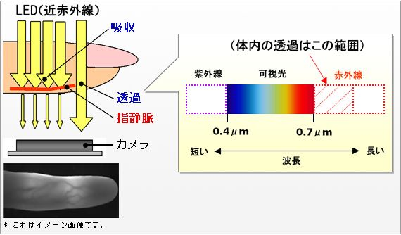 靜脈認證的原理是用近紅外線照射手指,如果紅外線遇上血管就會被吸收,產生黑影。