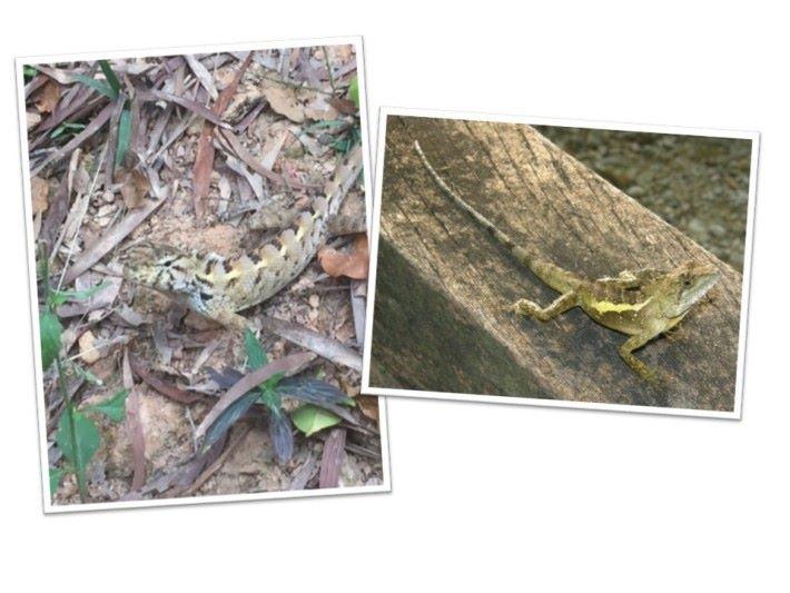 大自然中有很多變色的動物,他們藉此隱藏自己。