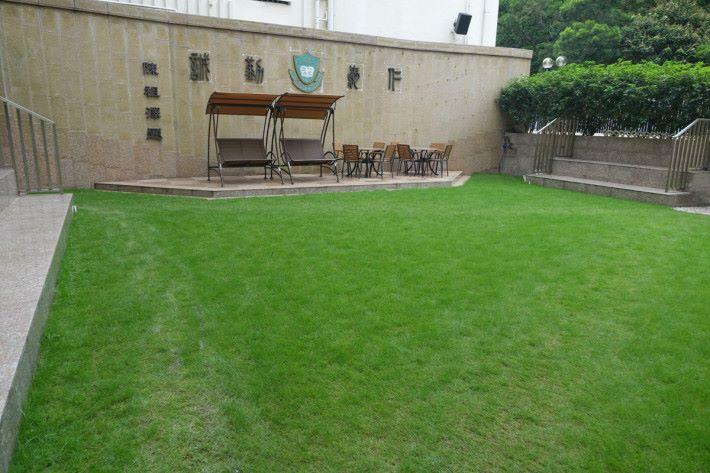 余中庭園的草地,實際上藏著很多 STEM 元素,包括納米技術和生態系統。