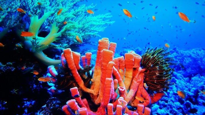 .珊瑚礁中的述色變化具有極佳層次感,背後的訊噪卻極少。