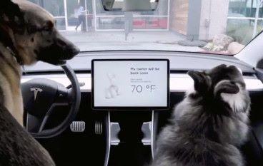 Tesla 加入寵物模式 確保主子們的安全