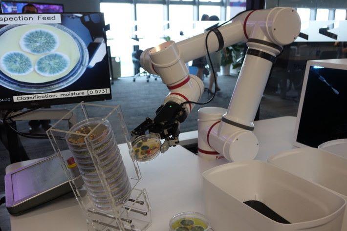 機械人將實驗室樣本自動分類,節省人手做重覆工作,而且更準確。