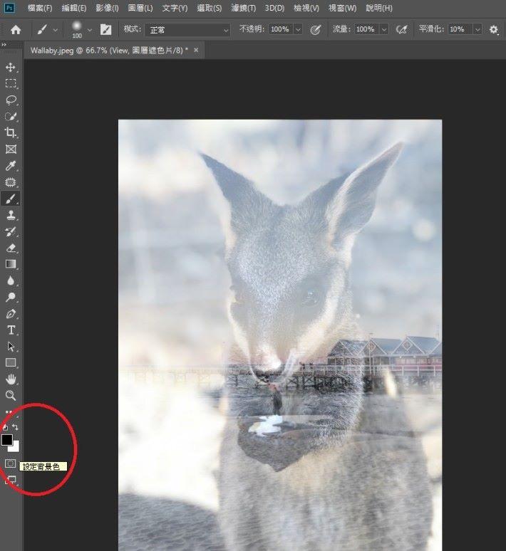 將前景色(Foreground Color)和背景色(Background Color)分別設置成黑色和白色。在前景色是黑色的情況下,使用筆刷工具擦除可以使 Wallaby 圖層露出更多細節。相反地,在前景色是白色的情況下,使用筆刷工具塗抹可以遮蓋更多 Wallaby 圖層的部分。