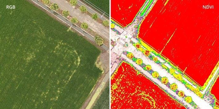 飛手可即時切換 RGB 影像與 NDVI 圖像,以便知道植被狀況。