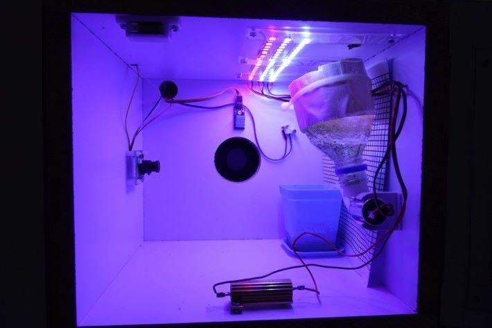 每一個植物木箱內,均有連串電子設備,是由學生自行組裝而成。