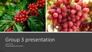 驟眼看葡萄和咖啡果確實十分相似。